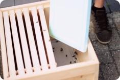Hier werden die Bienen in ihr neues Zuhause gebracht
