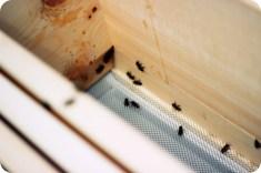Erste Erkundungen in der Bienenbeute