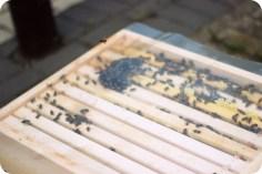 Und schon sind alle Bienen in der Beute