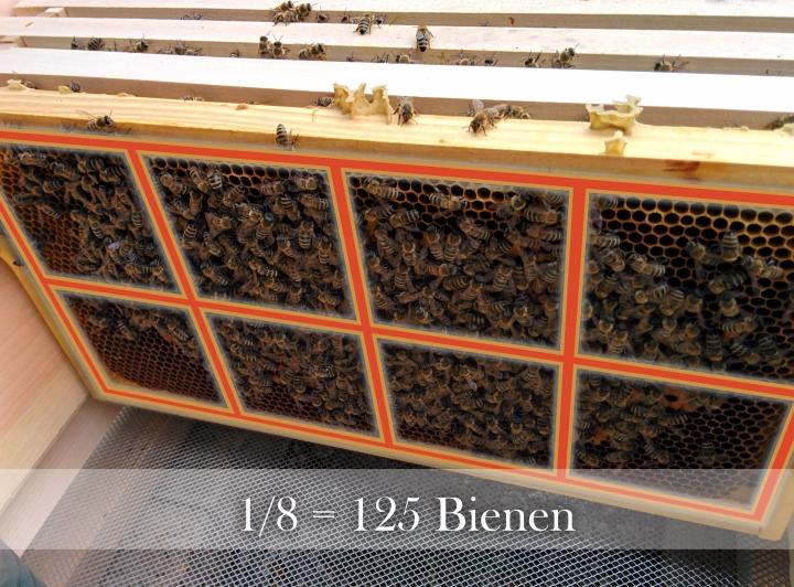 rund 5/8 sind hier mit Bienen bedeckt, macht auf dieser Wabe 625 Bienen